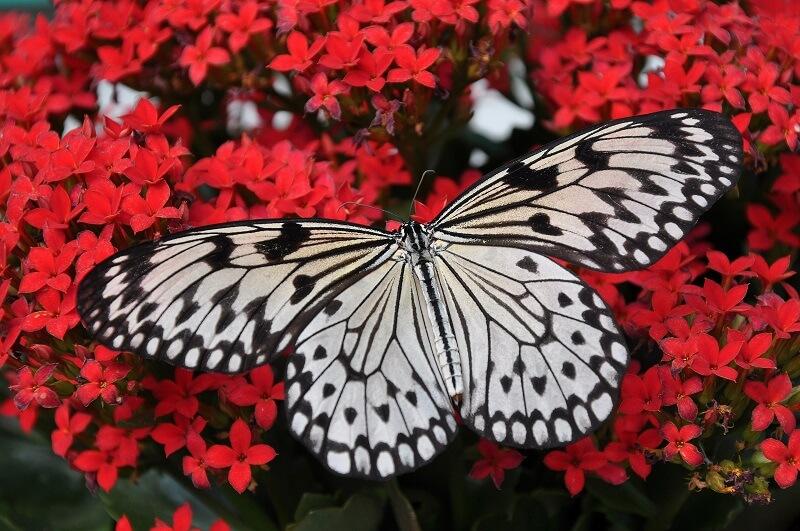Фестивал на пеперудите